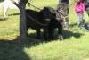 blagoslov konj cebelko (1)