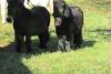 blagoslov konj cebelko (2)