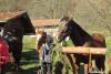 blagoslov konj cebelko (3)