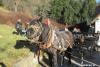 blagoslov konj cebelko (32)