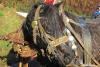 blagoslov konj cebelko (33)