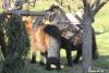 blagoslov konj cebelko (35)