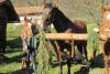 blagoslov konj cebelko (5)