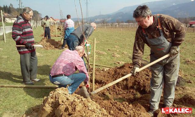 črešnjev drevored v črešnjevcu (1)