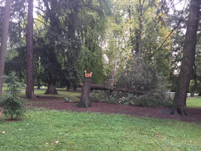 Eno od zlomljenih dreves v Mestnem parku.