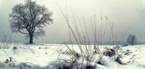 mrzla zima