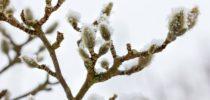 pomlad in sneg