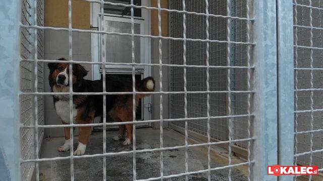 tisa, pes, azil, psicka, kuza