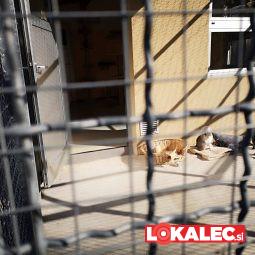 dan odprtih vrta azil maribor, Zavetišče za živali (5)