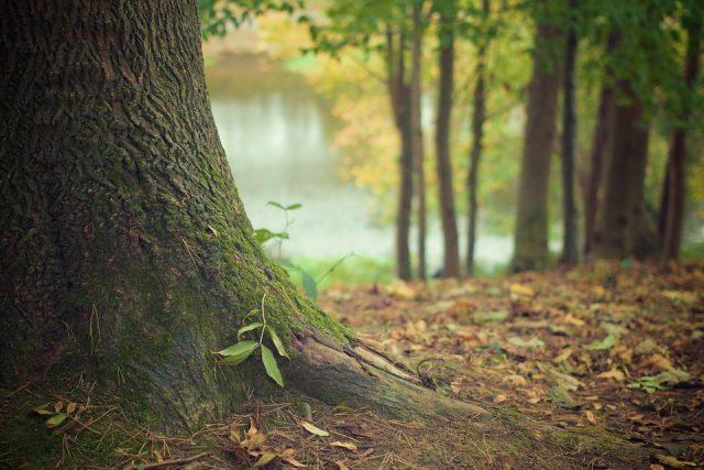 gozd, drevesa