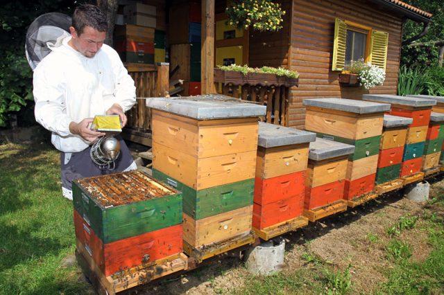 Vir: Čebelarstvo Cesar