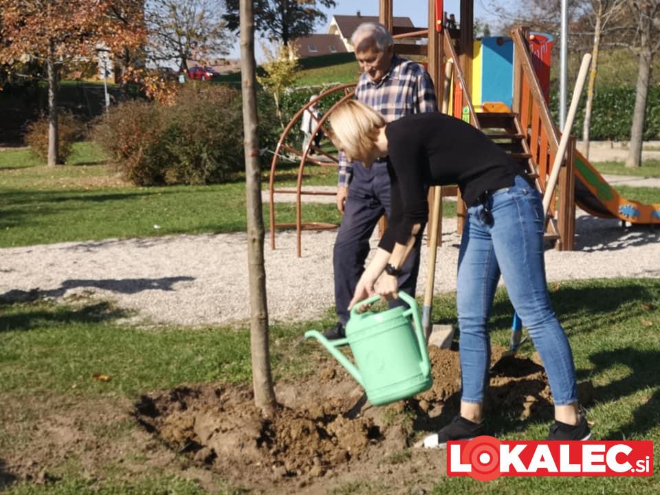 zasaditev dreves na Ptuju po neurju (3)